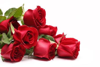 rózsák szolid díszítéssel