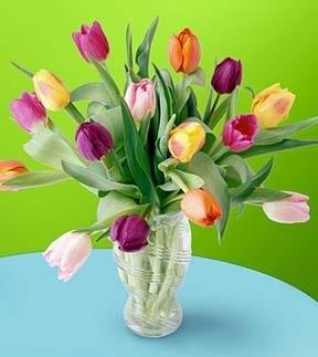 tulipánok vázával- 15 szál  (Csak Bp.-re és Pest megyébe rendelhető kiszállítással!)